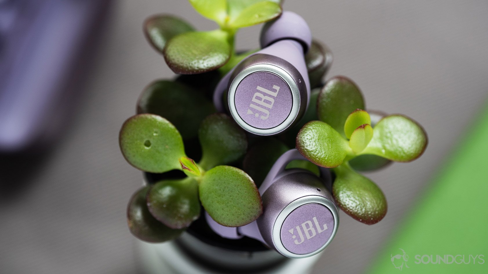 This image has an empty alt attribute; its file name is JBL-LIVE-300-TWS-true-wireless-earbuds-purple-plant.jpg